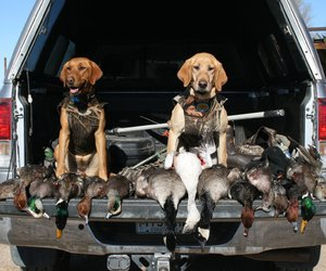 camo, goose, and country image