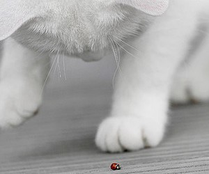cat, ladybug, and white image