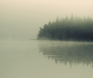 mist, trees, and water image