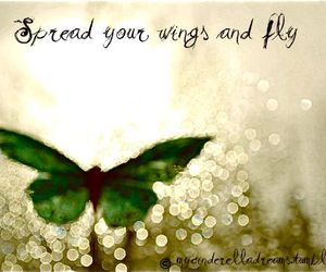 butterfly, green, and text image