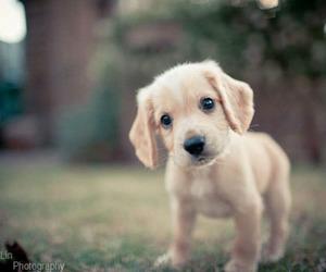 beautiful, dog, and nice image