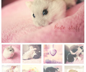 cat, hamster, and mouse image