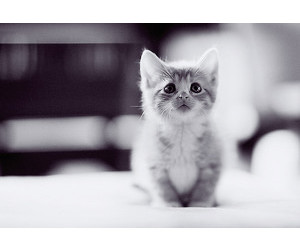 cute, black, and cat image