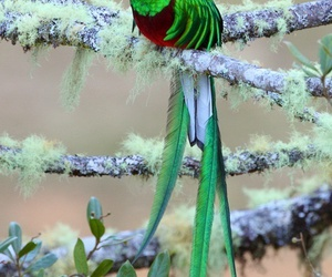 bird and green image