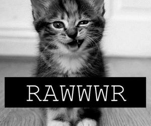 cat, little, and rawr image