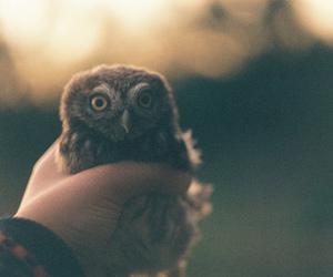 owl, animal, and vintage image