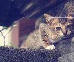 kitten and photography image