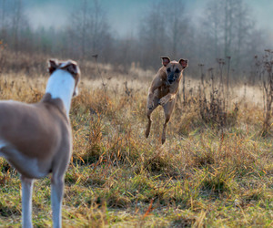 autumn, dog, and finland image