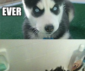 funny, dog, and puppy image