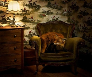 armchair, fox, and hunting image