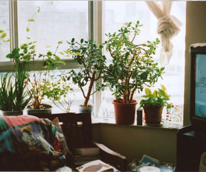 flowers, plants, and room image