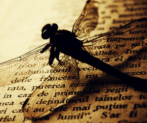 book and dragonfly image