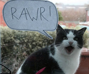 cat, rawr, and funny image