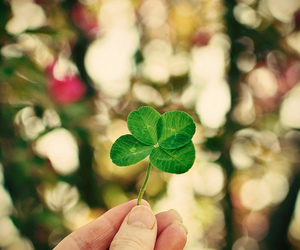 bokeh, clover, and four image