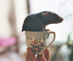 vintage, cup, and mouse image