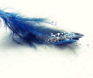 blue, feather, and glitter image