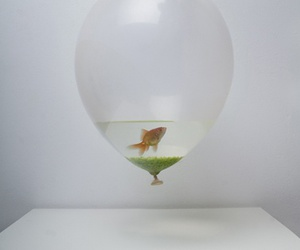 fish, balloons, and water image
