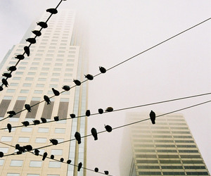 bird, fotografia, and birdie image