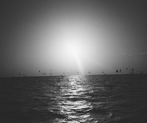 birds, sea, and black and white image