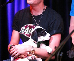 chico, one direction, and perrito image