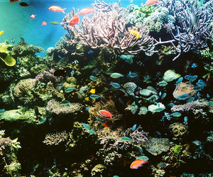 fish, coral, and colorful image