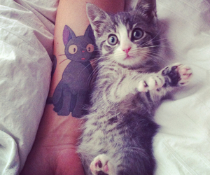 cat, cute, and tattoo image