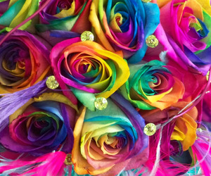 rose, rainbow, and colorful image