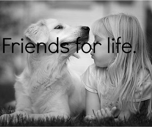 dog, life, and friends image