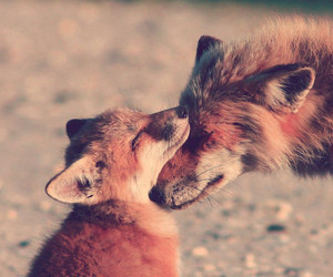 animal, love, and fox image