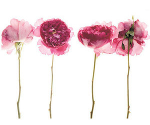 flower and filler image
