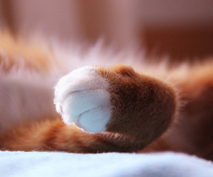kitten, paw, and cute image