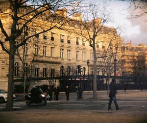 paris and tree image