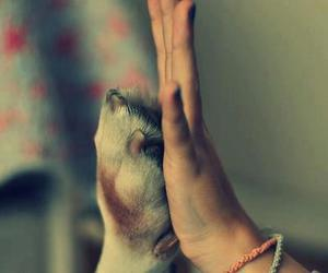 love, dog, and friendship image