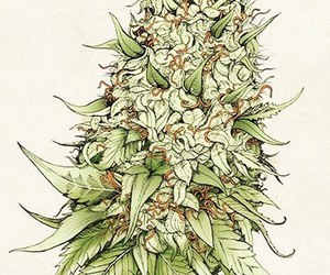 weed, bud, and drugs image