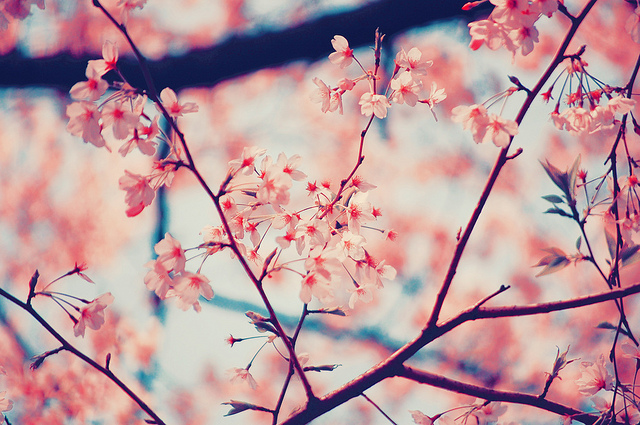 Flowers pastel photography pink inspiring picture on favim mightylinksfo