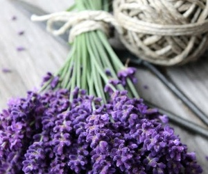 flowers, lavender, and purple image