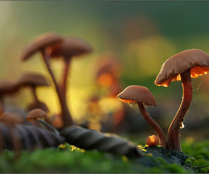 mushrooms and nature image