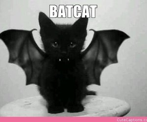 bat, captions, and cat image