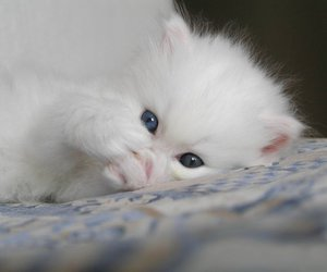 cute, cat, and eyes image