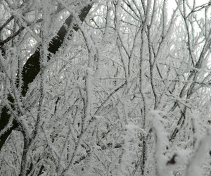 beauty, december, and forest image