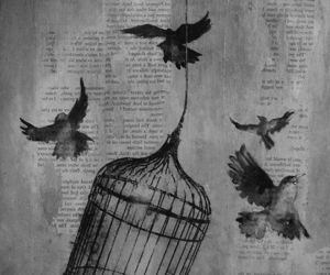 bird, cage, and freedom image