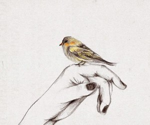 bird, hand, and drawing image