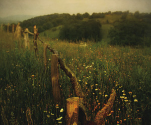 field and nature image
