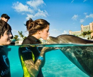 dolphin, girl, and kiss image