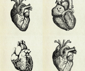 heart, drawing, and illustration image