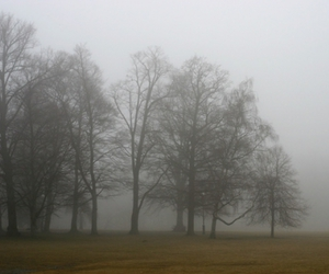 fog, park, and trees image