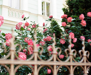 fence, pretty, and rose image