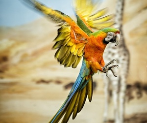 animal and parrot image