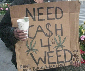 weed and cash image