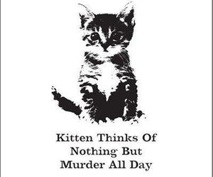 carefree, cat, and murder image